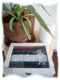 観葉植物とアロマ