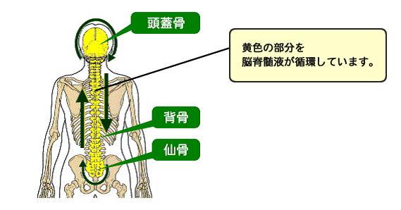 脳脊髄液の役割